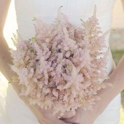 astilbe-bouquet-th.jpg
