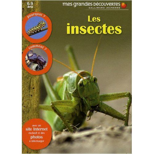 insectes4.jpg