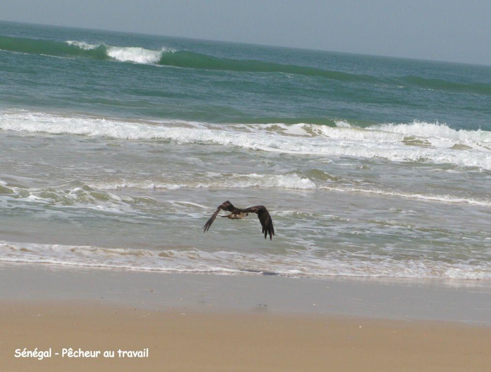 Voici en 200 photos une traversée du Maroc, de la Mauritanie, du Mali, du Sénégal et du Burkina-Faso  en Janvier 2012