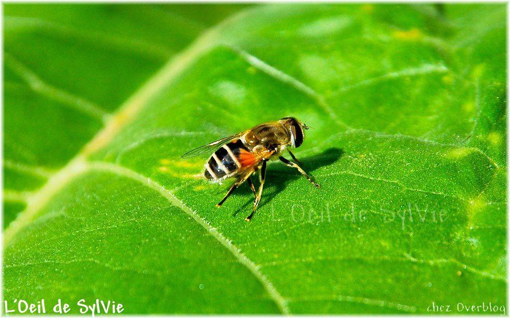 L'univers des insectes est fascinant lorsqu'on le regarde d'un peu plus près...