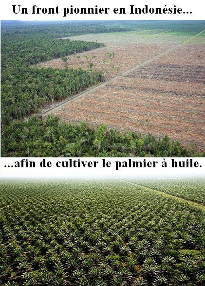front-pionnier-palmier