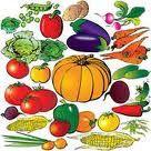 legumes-copie-1.jpg