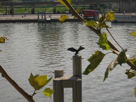 cormoran quai Louis Blériot