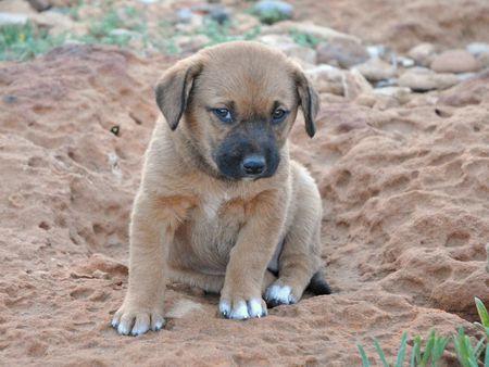 Site de rencontre pour amoureux des chiens