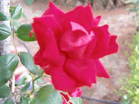 Flores 02