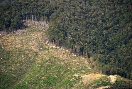 1 Deforestation in Newzealand (South Island: Tasman, Westcoast) | date