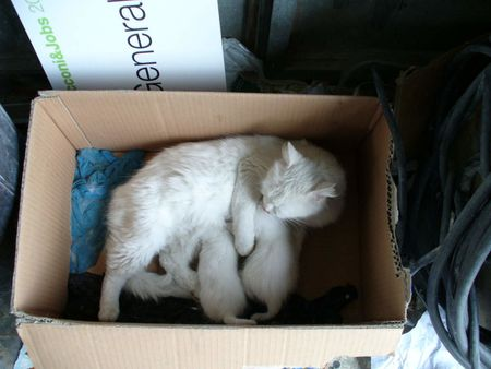Una scatola piena di Gatti , e Schachtle voll Buesi, a box full of cat