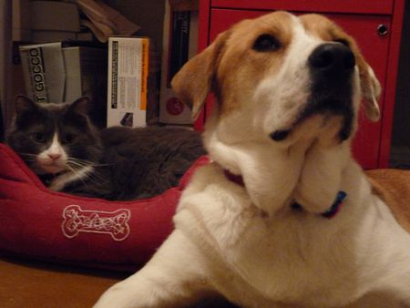 Cat in Dog Bed, Dog Standing By