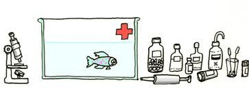 Astuces le blog de moune1 for Bac hopital poisson