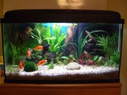 Le blog de moune1 for Aquarium pour poisson rouge