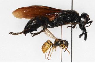 vespa-gigante.png