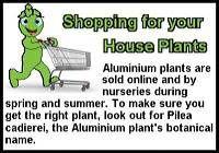 aluminium-plant-st