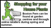 boston-fern-st
