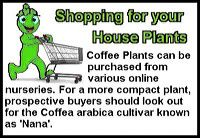 coffee-plant-st