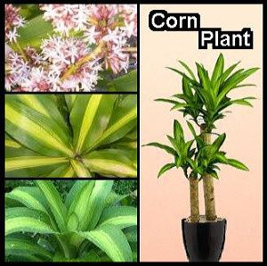 Different plants with their names images galleries with a bite - Names of indoor plants ...