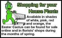 easter-cactus-st