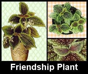 friendship-plant