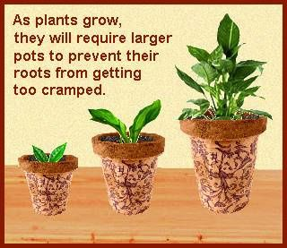 growing-plants.jpg