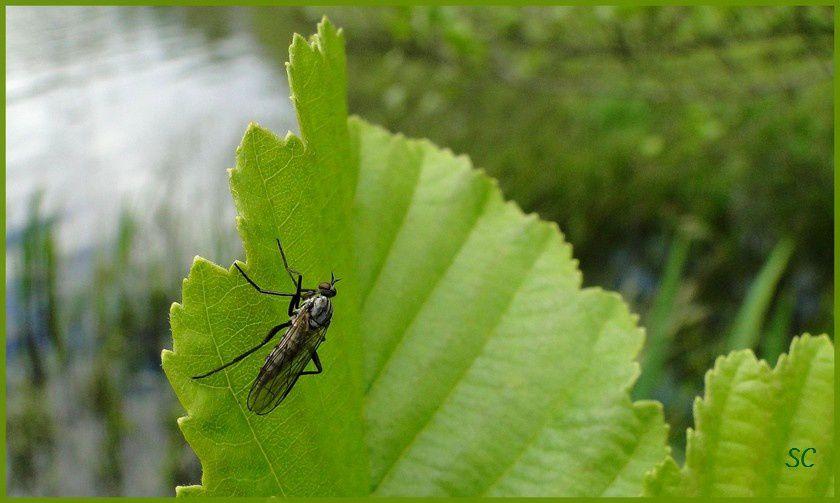 Quelques insectes et papilons de ma région... Abeille, mouches, araignées...