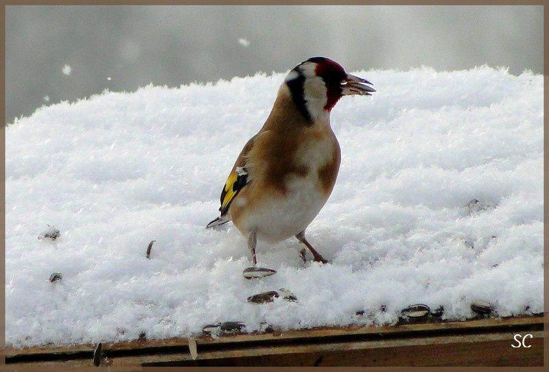Oiseaux communs, mouettes, de basses cour, hérons...