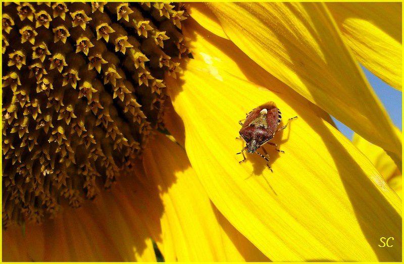 Chats, oiseaux et insectes essentiellement... Faune et flore mélangés parfois !