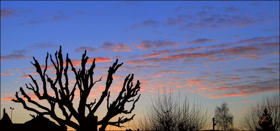 J'aime beaucoup ce moment ou le cile se pare de orange... et où le soleil finit sa journée ou la commence avec éclat...