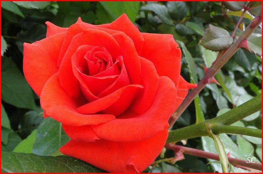 Admirez la finesses des fleurs prises en macro... et leur multiples couleurs et formes !
