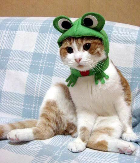 chat-grenouille.jpg