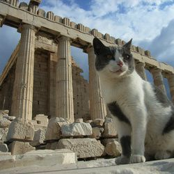 chat-grece-antique