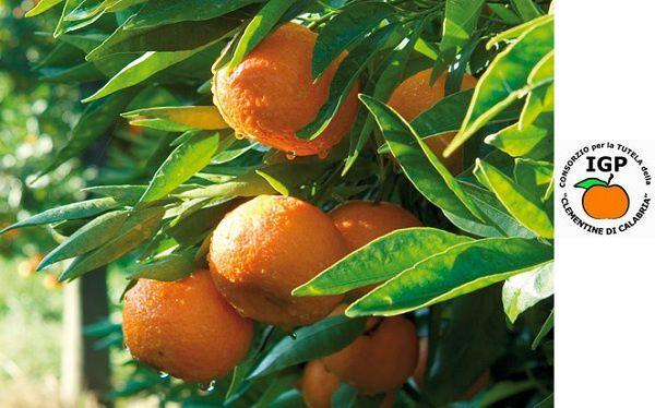 clementinedicalabria-copie-1.jpg