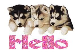 hello-dogs