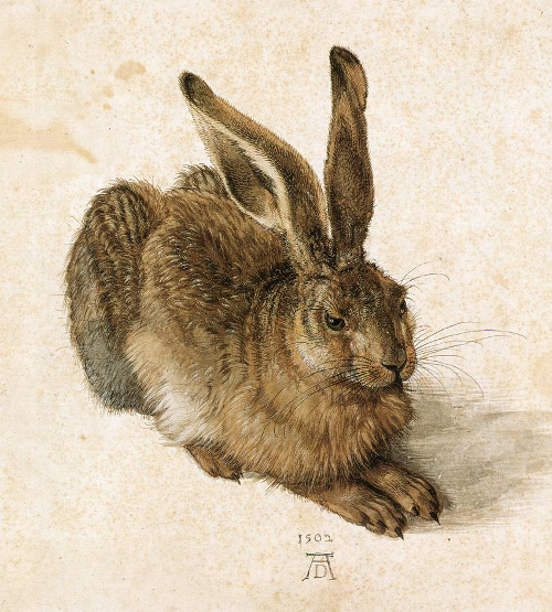 durer_young_hare.png
