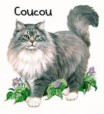 coucou chat