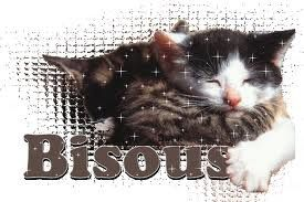 bisous chat