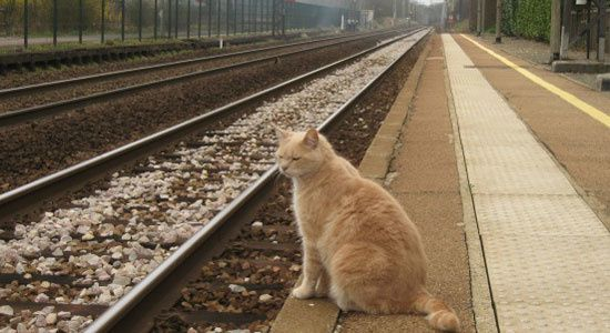 billet-train-chat.jpg