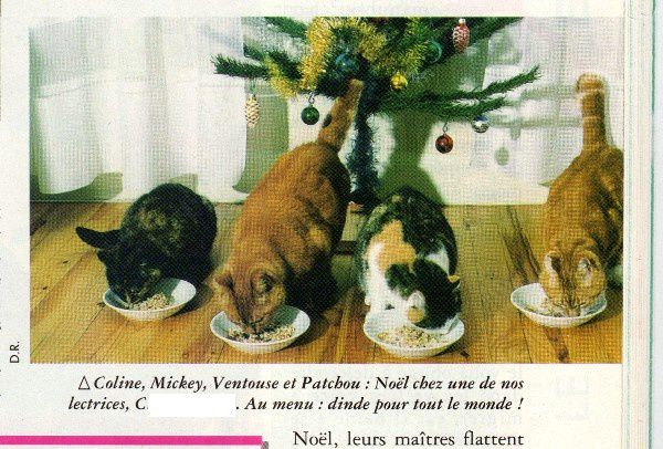 Atout-chat-coline-mickey-ventouse-patchou.jpg