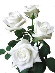 rose-blanches-bouquet-1.jpg