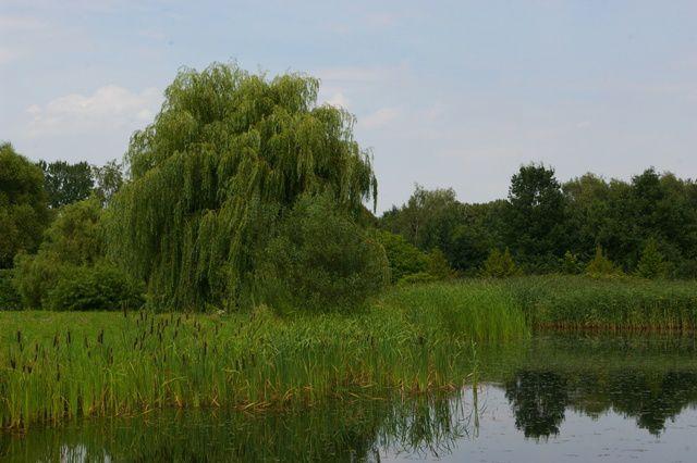 IMGP6388 Parc Floral de Lodz Etang