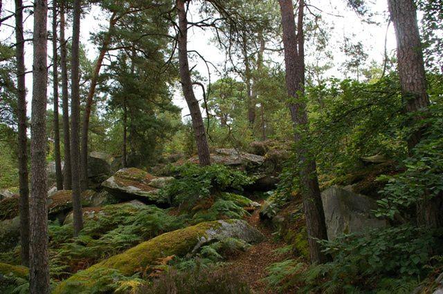 IMGP9313 Fontainebleau Rocher des Demoiselles