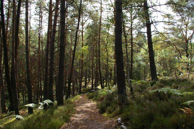 IMGP9353 Fontainebleau Rocher du Mont Morillon