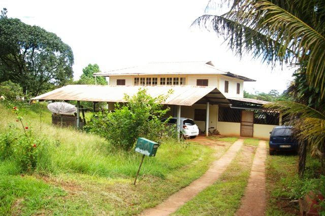 IMGP3905 Cacao Guyane