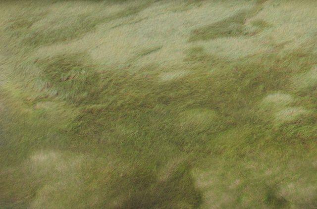 IMGP4462 marecages de Kourou small