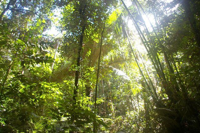 IMGP4550 Guyane Sentier de Montagne des Singes