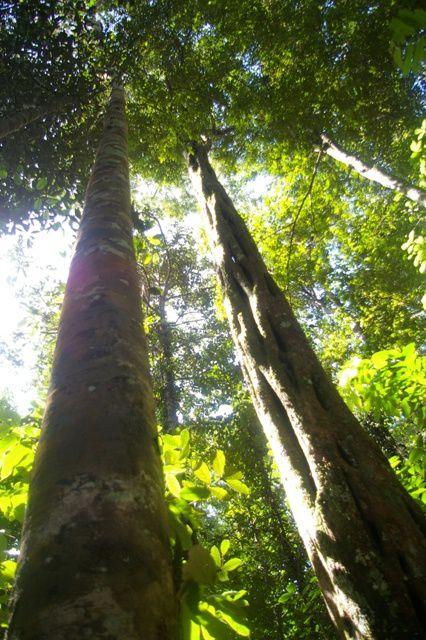 IMGP4562 Guyane Sentier de Montagne des Singes