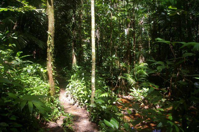 IMGP4579 Guyane Sentier de Montagne des Singes