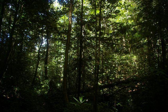 IMGP4589 Guyane Sentier de Montagne des Singes