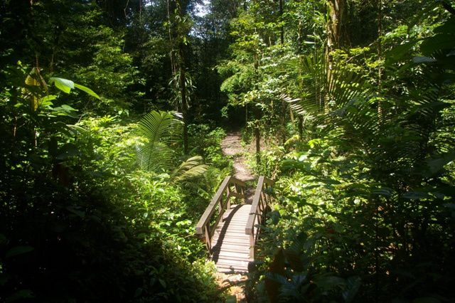 IMGP4595 Guyane Sentier de Montagne des Singes