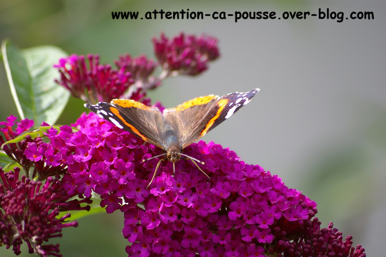 Les Boutures Attention A Pousse