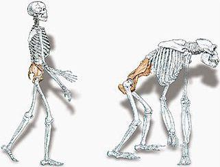 esqueletos-2.jpg