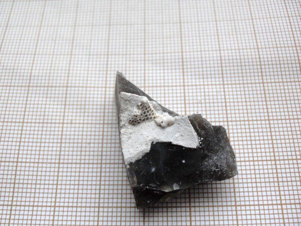 Fossiles qui proviennent des alentours du Tréport dans le 76 Seine Maritime. Etage Crétacé Supérieur.